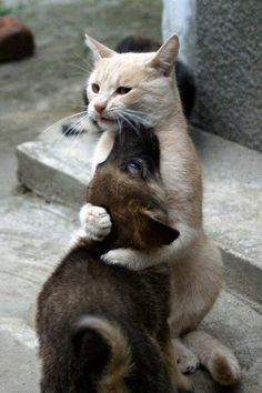Cat is either hugging or squeezing the life out of the pup....