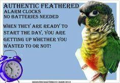 Training Your Pet Parrot Parrot Pet, Parrot Toys, Parrot Bird, Parrot Quotes, Bird Quotes, Funny Birds, Cute Birds, Feathered Dinosaurs, Diy Bird Toys