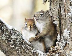 Squirrel Engagement Photo