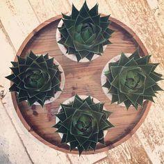 Wist je dat wij ook leuke plantjes verkopen?!  #plants #groen #potten #home #interieur #inspiratie #interior #viacannellacuijk #woonwinkel #shoppen #decoratie