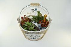 Miniature Succulent Farm