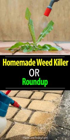A Homemade Weed Killer A Better Choice Than Roundup? Make a homemade weed killer safer than Roundup to use around your home and garden. Roundup has many questions concerning health issues. Garden Weeds, Garden Soil, Garden Care, Gardening For Beginners, Gardening Tips, Weed Killer Homemade, Weed Control, Lawn Care, Backyard Landscaping