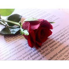 Rose for my sweetheart
