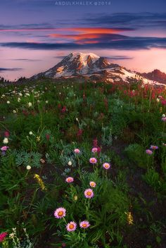 """Summer """"Paradise"""" at Mt. Rainier. Last share from 2014. 5 shots for the DOF and bracketing. CLICK ON THE PHOTO to watch on black and see  it all contained in frame."""