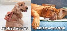 So true - vet school :) It's only funny because I was just talking to a vet student about this.