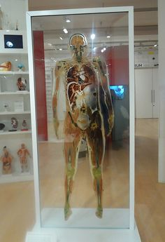 Diagram of male body at the Wellcome Collection in London: http://www.europealacarte.co.uk/blog/2013/05/20/photo-tour-wellcome-collection-london/