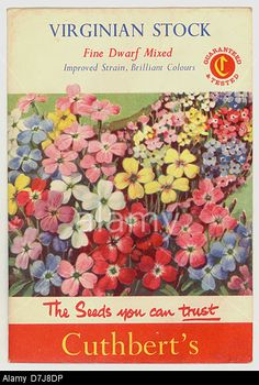 Virginian Stock old British seed packets uk. Vintage Flowers, Vintage Floral, Vintage Art, Vintage Photos, Vintage Seed Packets, Fred And Ginger, Seed Packaging, Color Test, Vintage Gardening