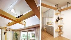 Japanese Cat-friendly House has open air cat walks - wide beams House Design, Room Design, House, Interior, Home, Modern Cat Furniture, Interior Design, Furniture Design, Cat Walkway