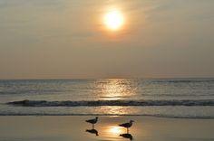 Fotobehang: Zonsondergang met Meeuwen