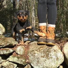 Stay. (Photo via Instagram: catheathdpt) Rottweiler puppy with L.L.Bean Boots