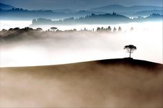 A lone tree emerges from early morning fog  Johan Ensing (Driehuis, The Netherlands)  Photographed August 2007, Tuscany, Italy