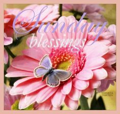 Sunday Greetings, Happy Sunday Quotes, Monday Blessings, Happy Week, Facebook Photos, Blessed, Thankful, Seasons, Pink