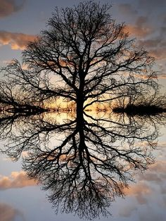 TREE OF LIFE: Love the perfect reflection, could be treated similarly to SUNRISE TREE. If cut to square, either edges would need to be built, or we could lose the bottom half or 2/3rds of reflection, or lose equal parts tree and reflection. (Edge bushes could be cleaned up).