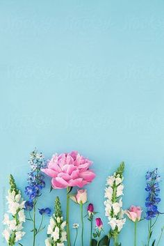 How pretty is this photo of flowers? Country garden flowers arranged on blue by Ruth Black #gardeningflowers