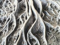 Natural #details... #roots Tree Roots, Sculpture Art, Adventure Travel, Flora, Trees, Natural, Instagram Posts, Tree Structure, Plants