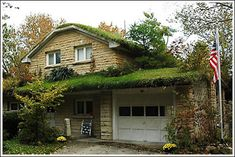 Extensive roofs are the most common type of vegetated roof for a home because they require low to no-maintenance. An extensive green roof only requires a very thin layer of soil (1-6 inches), and can sustain many different types of grass. It is virtually self-sustaining and only requires weeding about once a year.