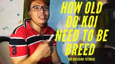 Koi Breeding How Old Do Koi Need To Be Breed (Tagalog) Koi Fish Pond, Tagalog, Old Things, T Shirt, Women, Fashion, Supreme T Shirt, Moda, Tee Shirt