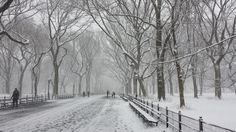 Springtime snow, Central Park.