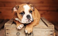©Fauvelia : French Pet Studio photography