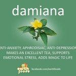 Damiana | What is Damiana?