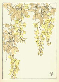 Laburnum, Jeannie Foord, Decorative Flower Studies, 1901