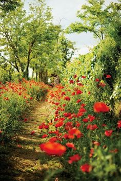 A poppy-flanked path on blissfully unpeopled Torcello
