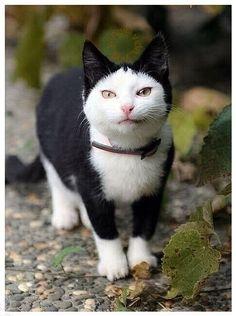 (39) The Cult Cat (@Elverojaguar)   Twitter