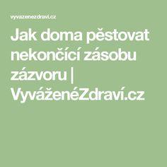 Jak doma pěstovat nekončící zásobu zázvoru | VyváženéZdraví.cz