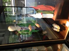 window display - casuals- color story green blue orange