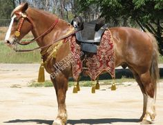 medieval horse tack | Caparisons, Barding & Banners : Historic Enterprises, We're making ...