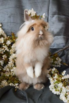 Cute Lionhead rabbit posing with flowers