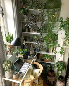 Decorating Inside with Low Maintenance Houseplants Room With Plants, House Plants Decor, Plant Decor, Indoor Garden, Indoor Plants, Home And Garden, Decoration Plante, Plant Aesthetic, Interior Plants