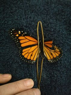 Depending what time of year they're born, Monarch butterflies can live from 2 weeks to about 5 months, but this guy's time was threatened to be cut ever shorter. Romy McCloskey committed to raising these creatures some time ago, and after one of them came into this world with a wing defect, she knew something had to be done. McCloskey turned her home into an operating room and used common household items to perform a wing transplant.