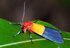 Unidentified moth from Madagascar