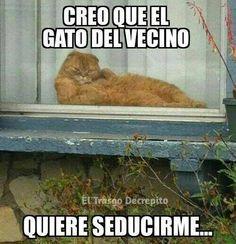 El gato del vecino. #humor #risa #graciosas #chistosas #divertidas