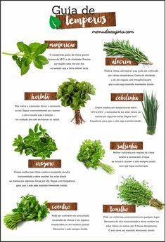 Mother, Wife, IBD Fighter helping women not only achieve a healthy and fit body but also help them develop the confidence and positive mindset along the way. Herb Garden, Vegetable Garden, Home And Garden, Green Life, Spices, Minis, Backyard, Patio, Flowers