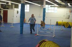 UKI Agility at Kellar's Canine Academy 5/27/2013