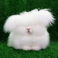 #bunny #conejito #rabbit #esponjoso