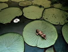 Amazônia Brazil.