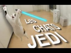 Les chats jedi - YouTube