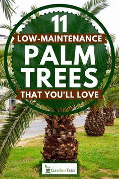 Tropical Backyard Landscaping, Landscaping Around Pool, Landscaping Around Trees, Florida Landscaping, Landscaping Ideas, Sloped Backyard, Pool Backyard, Florida Gardening, Front Yard Garden Design