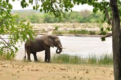 Wildlife, Elephant, In This Moment, Game, Venison, Games, Elephants