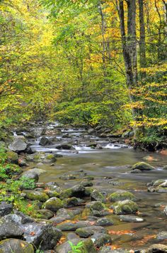 Oconaluftee River along Newfound Gap Road (U.S. 441) in the Great Smoky Mountains National Park