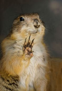 ~~touch..! ~ prairie dog by tubasa-wings~~