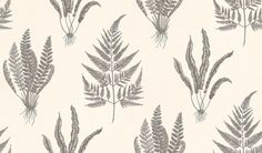 Woodland Fern (DAPGWO105) - Sanderson Wallpapers - A delicate, intricate pen and ink drawing of 3 different fern species.  Available in 5 colourways – shown in the metallic black on cream. Please ask for sample for true colour match.