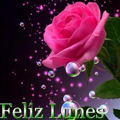 Linda Rosa para desear un Feliz Lunes Más
