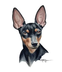 "Fantastic ""miniature pinscher puppy"" info is readily available on our website. Mini Pinscher, Doberman Pinscher, Miniature Pinscher, Dachshund, Miniature Doberman, Cool Wall Art, Mundo Animal, Dog Art, Watercolor Paintings"