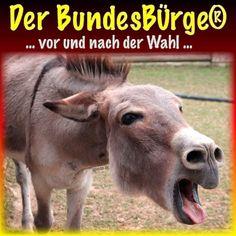 ❌❌❌ Wie wissen wie ernst die Lage ist und wie ernst wir die Wahlen zu nehmen haben. Sachsen lässt heute einen Ruck durch Deutschland gehen, wenigstens aber einen weiteren großen Schritt zwecks Abschaffung der FDP. Zur Vorbereitung der allgemeinen Feierlichkeiten (einen Sieger wird es am Abend in jedem falle geben), schenken wir den Lesern schon mal ordentlich einen ein, denn auf das Ergebnis kommt es doch nun wirklich nicht mehr an, Hauptsache Party. ❌❌❌