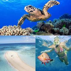 Stay at any of our incredible Port Douglas Villas and you will be just a short trip away from the wonders of the Great Barrier Reef! #snorkel #sand #swimsuit #awesome #bikini #turtle #beach #dive #diving #nemo #swim #swimming #travel #holiday #vacation #vacationspot #reef #greatbarrierreef #queensland #portdouglas #instagood #instatravel #travelingram #beachlife #getaway #relax #goodwillgetaways #cairns #villa #luxury by goodwillgetaways http://ift.tt/1UokkV2