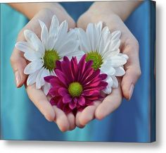 Daisies In Child Hands Acrylic Print by Natalia Ganelin. All acrylic prints are professionally printed, packaged, and shipped within 3 - 4 business days and delivered ready-to-hang on your wall. Flowers For You, Love Flowers, My Flower, Flower Power, Beautiful Flowers, Daisy Flowers, Giving Hands, One Thousand Gifts, Open Hands
